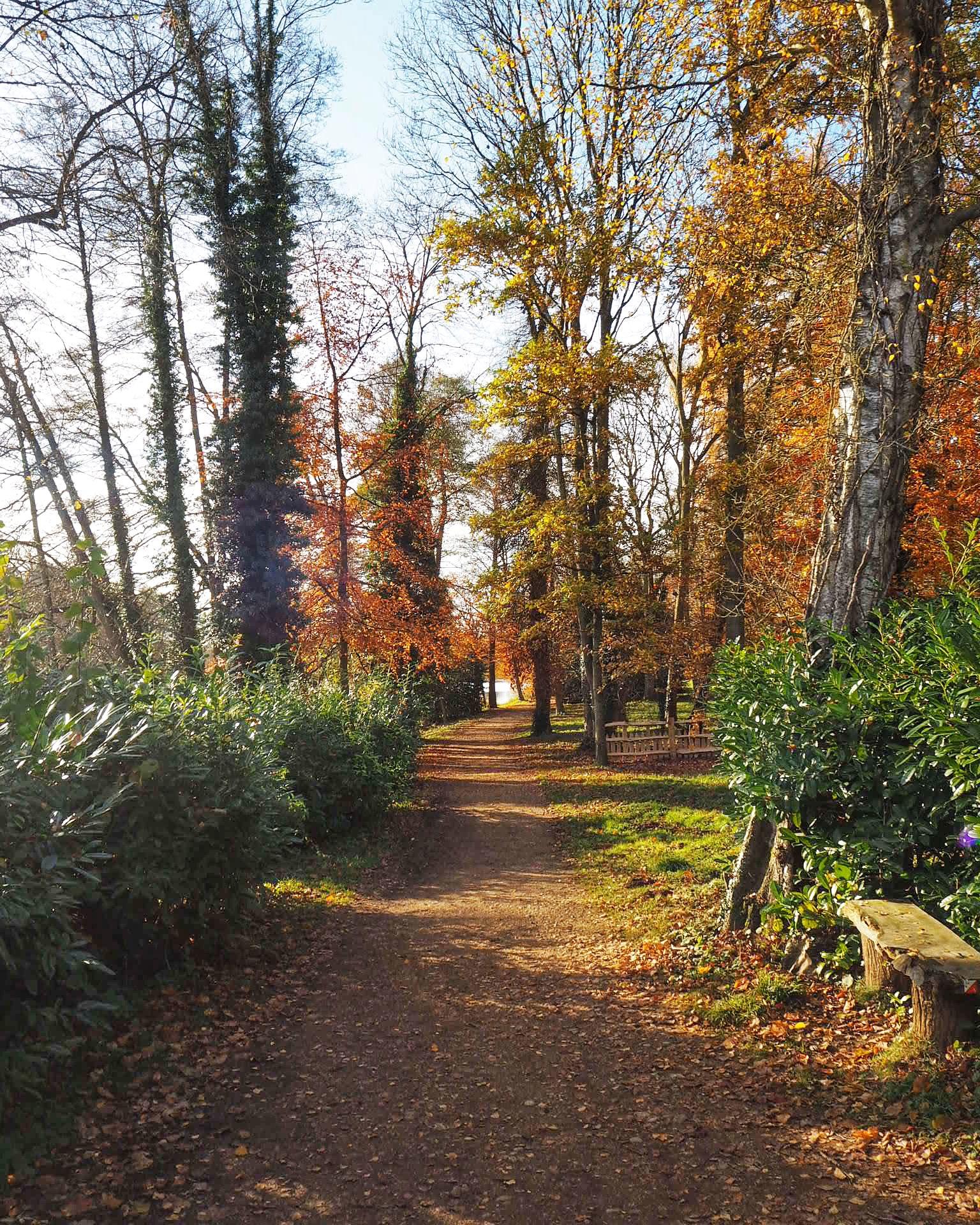 Woodland, Stowe Landscape Gardens